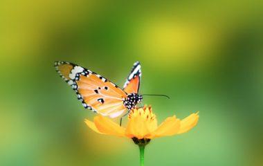 על חדווה ואופטימיות בפסיכותרפיה